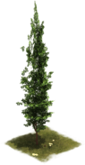 File:14 EarlyMiddleAge Cypress.png