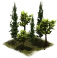 27 LateMiddleAge Group of Trees.png
